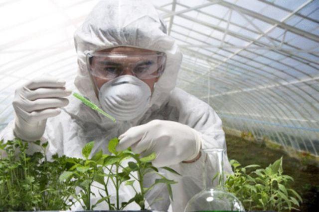 Что нужно знать о ГМО?