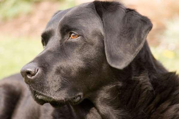 Точность собачьего обоняния