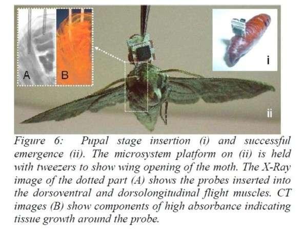 cyborg moth
