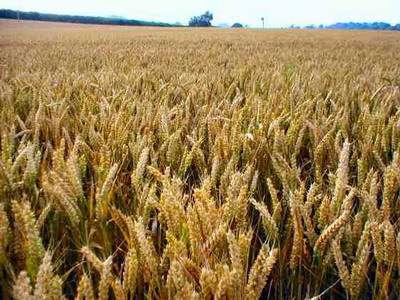 Как угроза глобального продовольственного кризиса может повлиять на мировые рынки