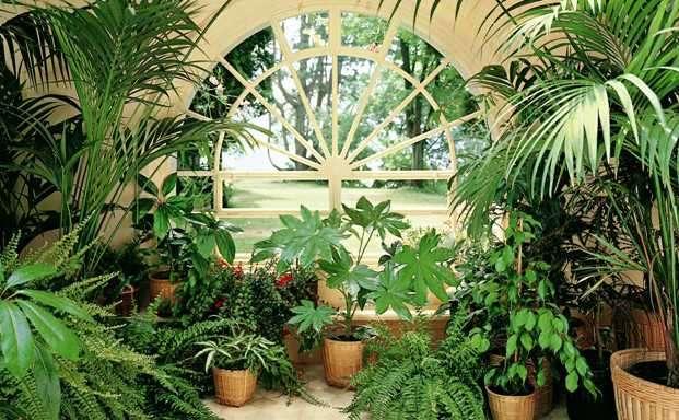 Для очистки воздуха в доме используйте  комнатные растения