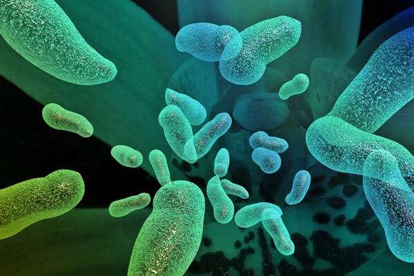 Что каждый должен знать о пробиотиках