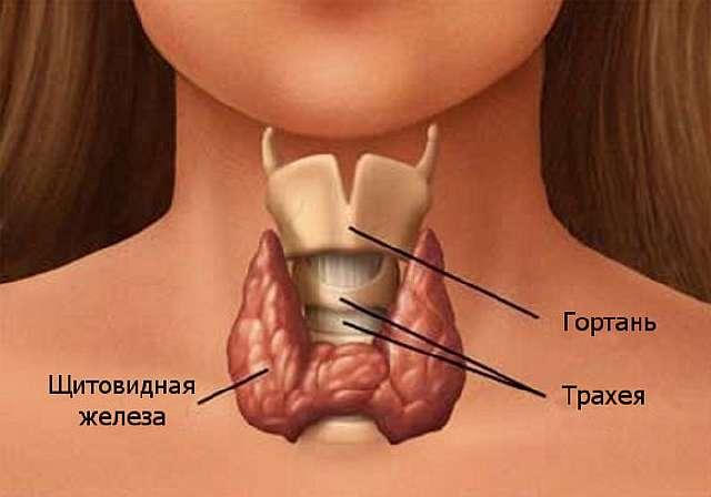 Симптомы снижения функции щитовидной железы