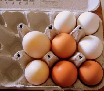 eggs-are-protein-rich
