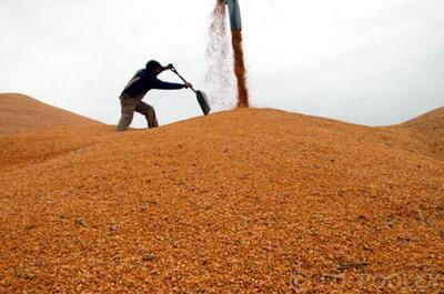 Мир уже выращивает достаточно продовольствия, чтобы накормить 10 миллиардов человек