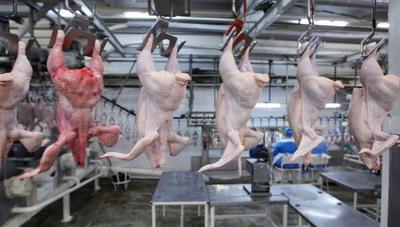 Россия достигла рекордных показателей в обеспечении себя птицеводческой продукцией