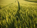 Резкое снижение объёмов индустриального земледелия может свидетельствовать о наступлении «продовольственного пика»
