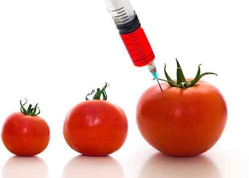 Почти триста учёных и экспертов сошлись во мнении, что безопасность использования ГМО не доказана