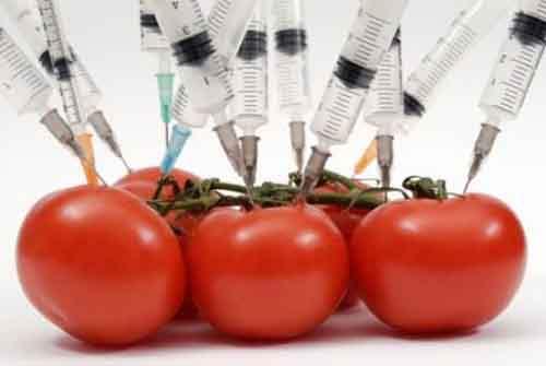 ГМО может стать причиной исчезновения жизни на Земле