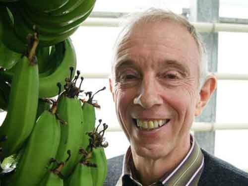 Ведущий специалист в банановой индустрии профессор университета Лёвена Рони Свеннен