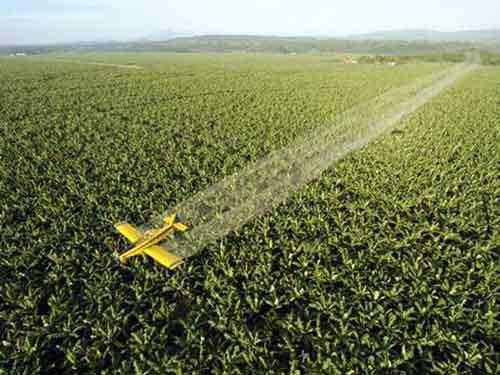 Самолёт распыляет противогрибковое средство над плантацией