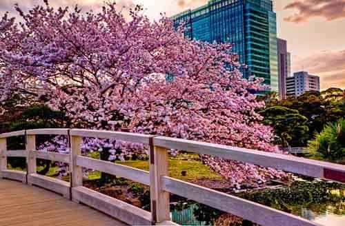 Окинава, Япония