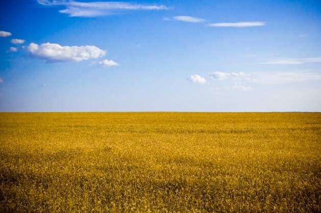 Typical-agricultural-landscape-of-Ukraine-Kherson-Oblast-629x418