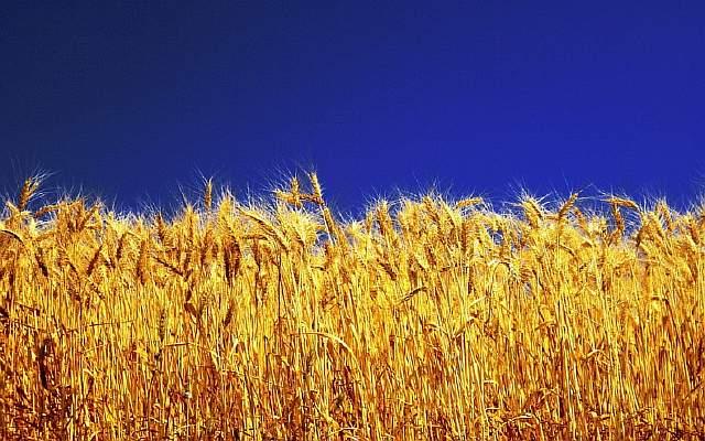 Гиганты агропромышленности, ГМО и Украина