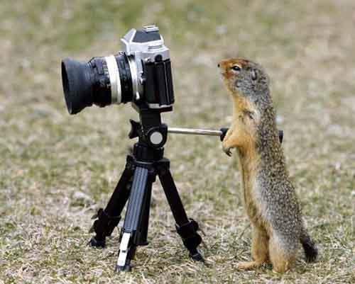 Надежная фото-техника - не подводит в важный момент