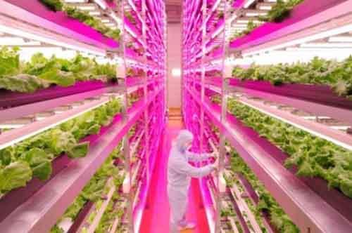 worlds-largest-indoor-farm-468x311