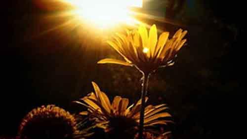 Питаясь солнцем: можно ли научить человека фотосинтезу?