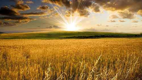 golden-wheat-field-nature-hd-wallpaper-1920x1200-9597