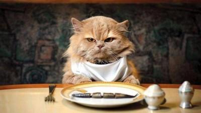 Правильное питание стерилизованных котов и кошек