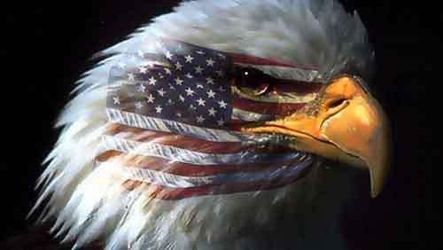 541524__american-eagle_p
