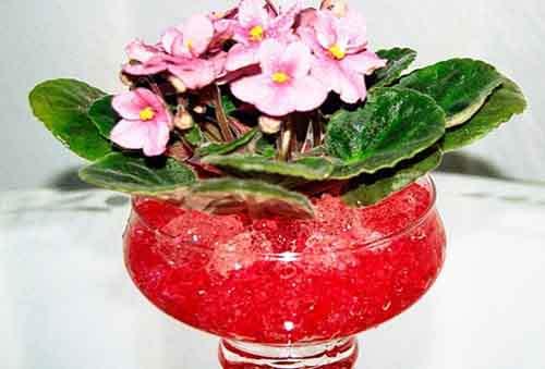 Гидрогель новое слово в поливе растений