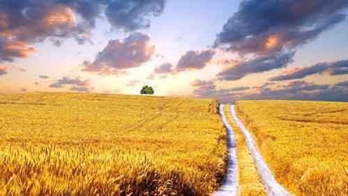 Agricultural_land_Ukraine_2