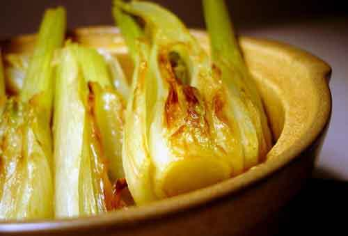Braised_fennel_yes_text