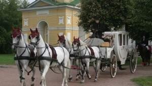 Эксперт делится советами об оказании услуг конными клубами
