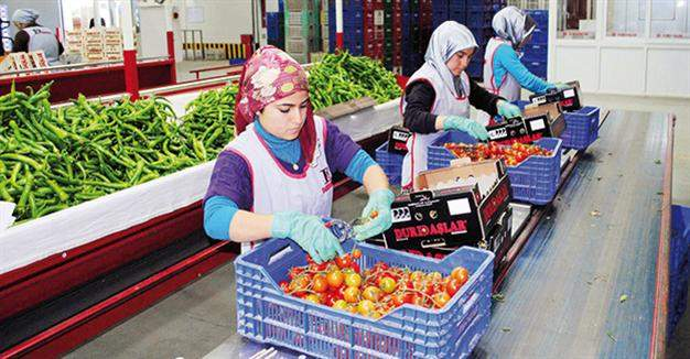 Подпись к изображению: В рамках санкций Россия установила запрет на экспорт плодоовощной продукции из Турции, что оказывает дополнительное негативное влияние на и без того тяжелое положение сельскохозяйственного сектора турецкой экономики