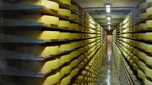Подпись к изображению: Российские контрсанкции оказались катастрофой для владельцев молочных ферм в странах Евросоюза