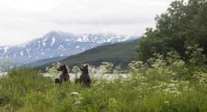 Больше двух третей британцев готовы бросить Великобританию ради бесплатной земли в Сибири - MixedNews.ru