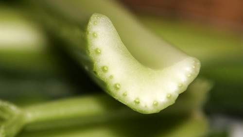 Celery_cross_section