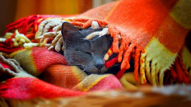 cat-sleep-blanket-1600x900