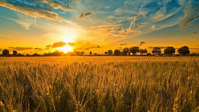 8589130426407-sunset-and-wheat-field-wallpaper-hd