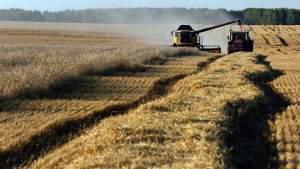 Став мировым лидером по поставкам пшеницы, Россия доказала бессмысленность санкций