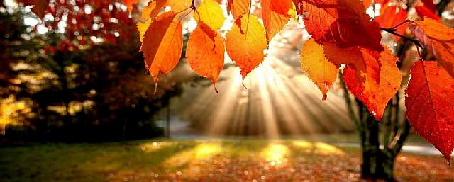 fall-desktop-wallpaper-widescreen-9