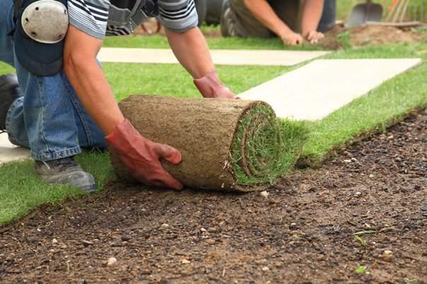 укладка газона - копия