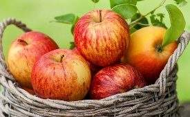 Ароматный яблочный самогон вполне заменит элитные виски