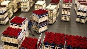 Перевозка цветов автотранспортом
