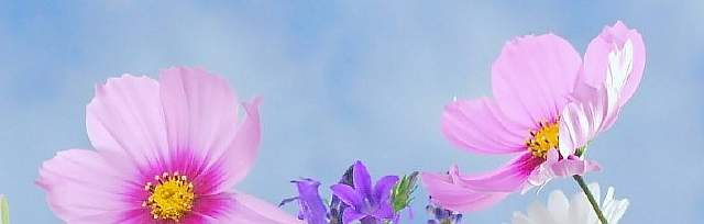 cropped-wild-flowers-571940_1920