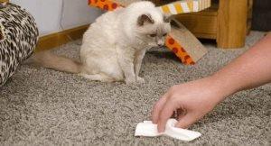 Как избавиться от неприятного запаха от ковра, если дома есть животные?