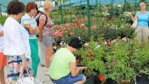 Питомник растений: на что важно обратить внимание при выборе
