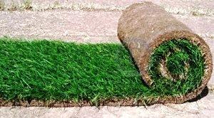 Как выбрать травяное покрытие и как рассчитать стоимость укладки рулонного газона?