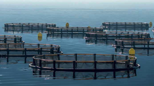 Российский вылов рыбы достиг рекордных показателей