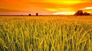Россия может уступить Украине титул крупнейшего в мире экспортера зерна
