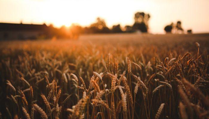 Россия предлагает создать «зерновую ОПЕК» для обеспечения стабильности рынка зерна и решения проблемы голода в мире