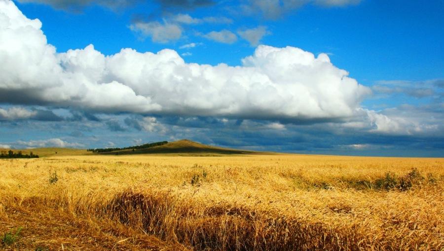 Россия превратилась в великую зерновую державу, но остается чистым импортером продовольствия