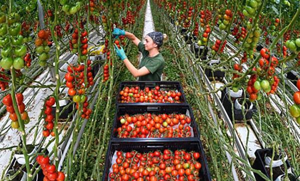 В России в 2020 году ожидается рекордный урожай овощей