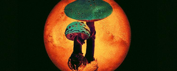 Марсианские грибы – скорее всего, фейк, но надежда на существование жизни на Красной планете остается