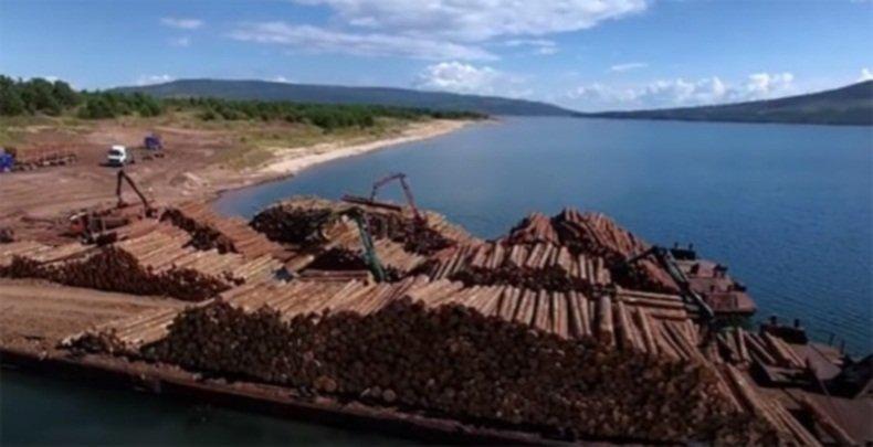 Отчёт: IKEA продавала мебель, сделанную из древесины, полученной в результате незаконной вырубки заповедных лесов России